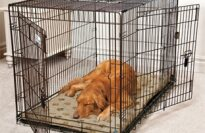 Doctors Foster and Smith Elite Classic 3 Door Dog Crate