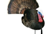 Carry Lite Bobbin Tail Tom HD Turkey Decoy