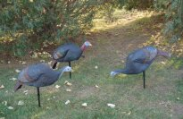 Gander Mountain Turkey Decoys, 3-Pak