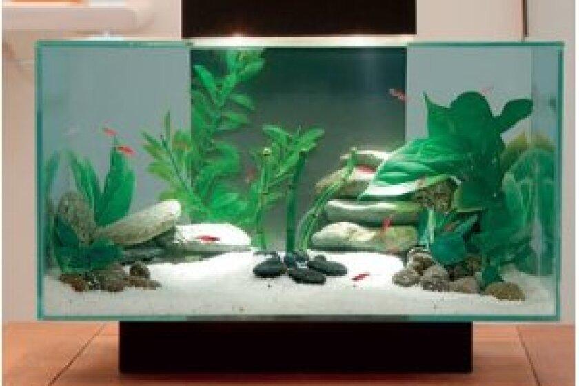 Fluval Edge Aquarium