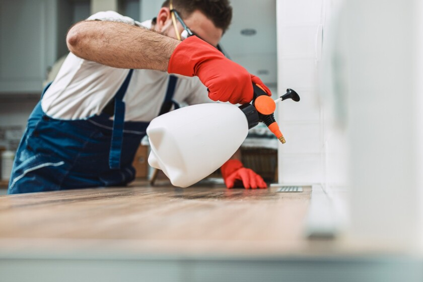10 Ways To Help With Pests in the Home